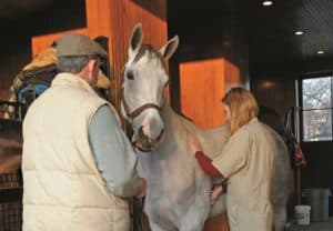 What Does a 'Free' Horse Cost? Part 2