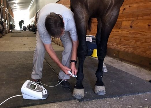 Tips for Rehabbing Soft Tissue Injuries in Horses