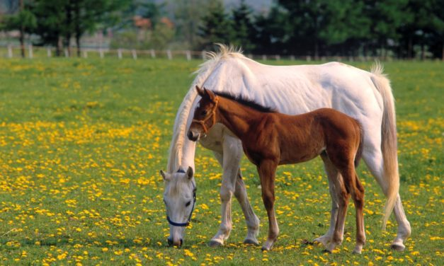 How Broodmare Nutrition Affects Her Foal