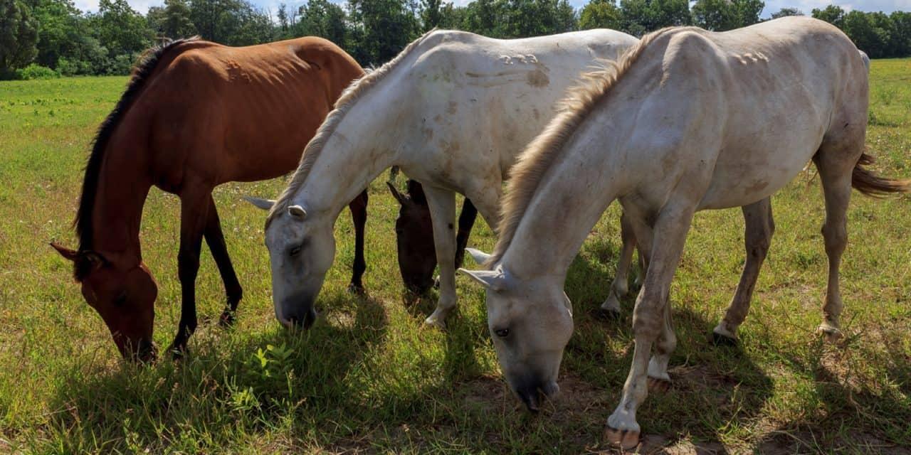 How Many Horses Makes a Hoarder?