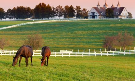 Kentucky Equine Market Continues to Show Improvement