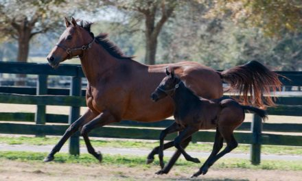Evaluating Neonatal Foals and Post-Partum Mares at Foal-Heat