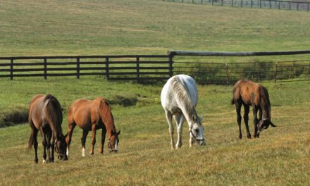 Digital Foal Certificates to be Introduced in 2018