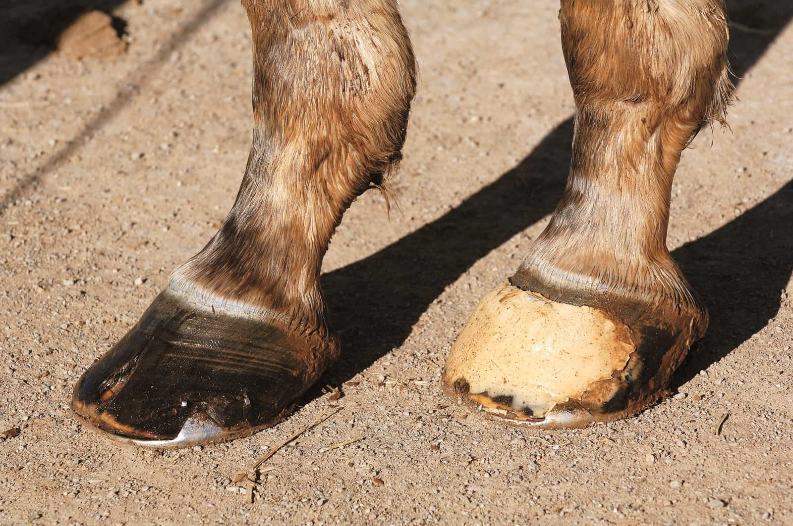 Hot Topics in Hoof Care, Part 4: The Abnormal Horse Hoof – The Horse