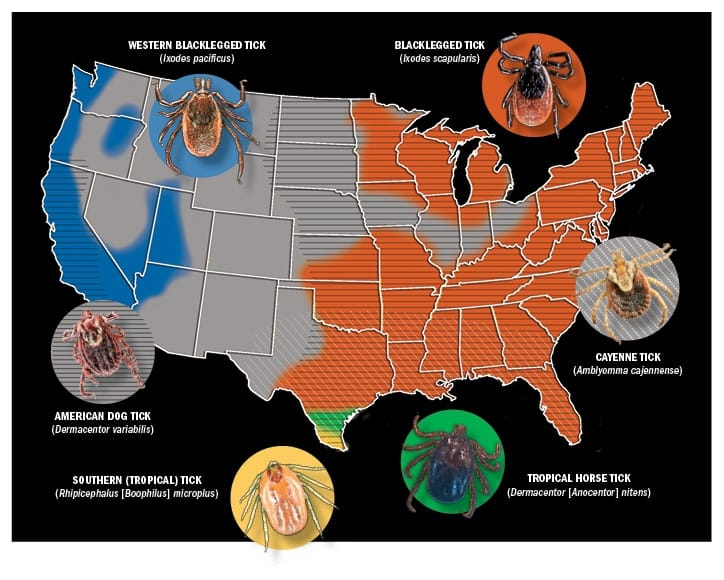Tick Borne Disease Tremendously Tricky In Horses The Horse - Map-of-ticks-in-us