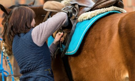 Help for a Girthy Horse