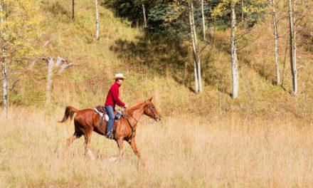 Jockey Club TIP Introduces Recreational Riding Program