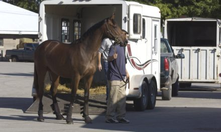Switzerland Ramps Up Horse Traceability Laws