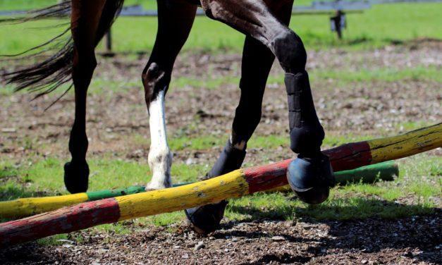 Methods for Rehabbing Horse Joints