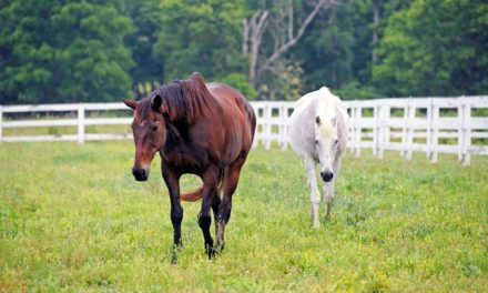 When is an Older Horse Ready for Senior Feed?