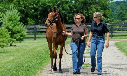Best Practices for Equine Rescues