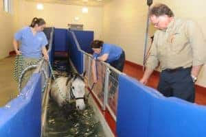 Underwater Treadmill Exercise's Effects on Horses' Backs