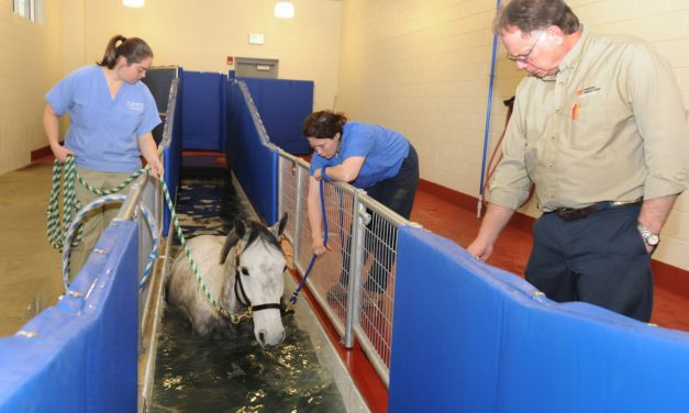 University of Tennessee Hosts Equine Facility Grand Opening