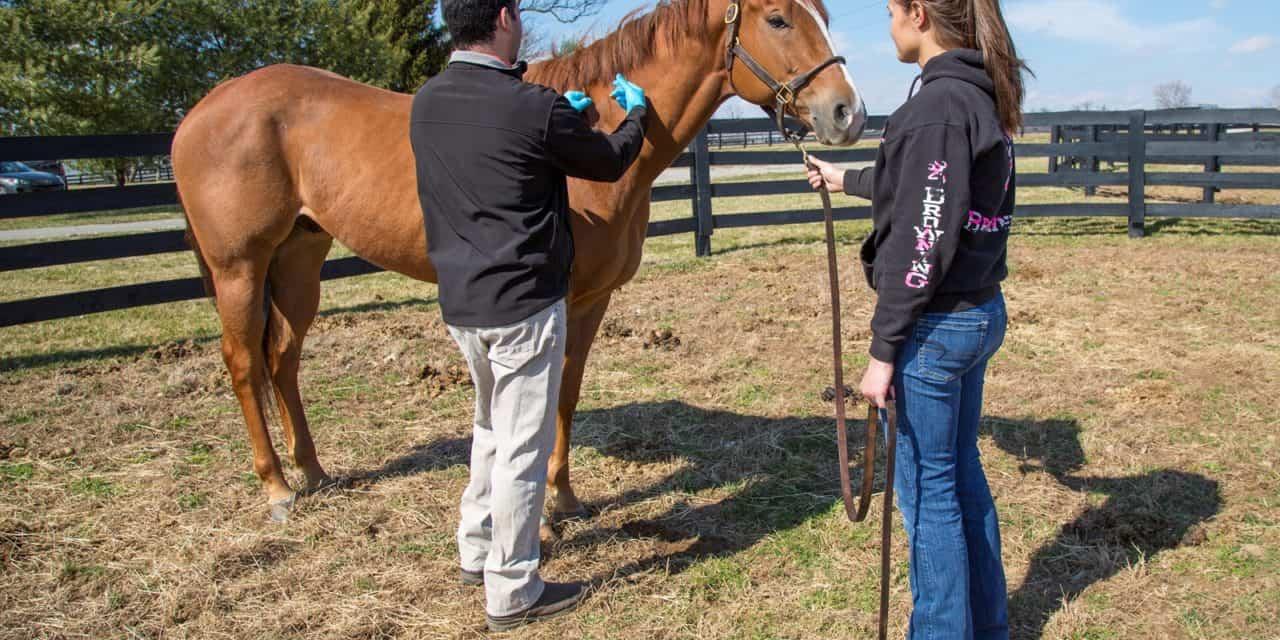 West Nile Virus can Threaten Horse Health this Fall