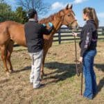 Fall Vaccines for Horses