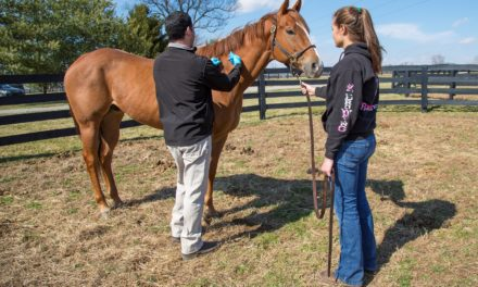 Does Changing Equine Flu Vaccine Manufacturers Matter?