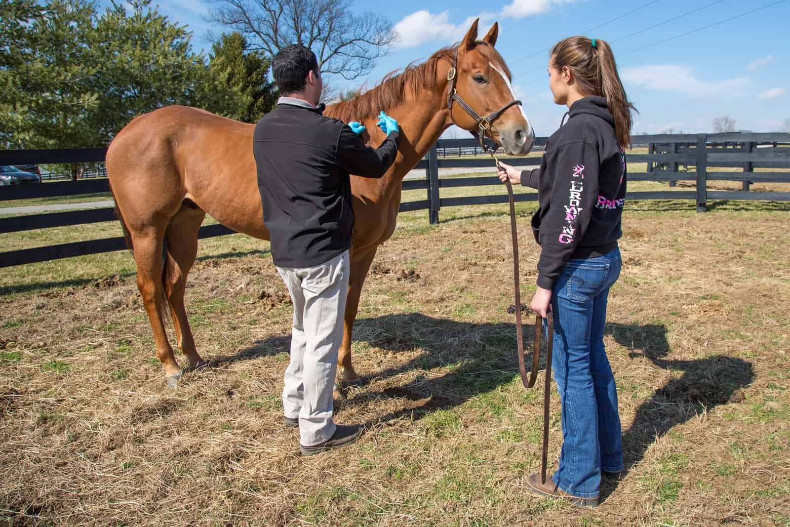 Fall Vaccines for Horses – The Horse