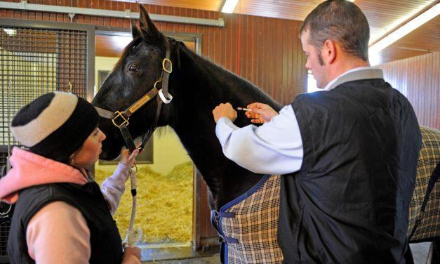 Six Must-Discuss Horse Health Topics