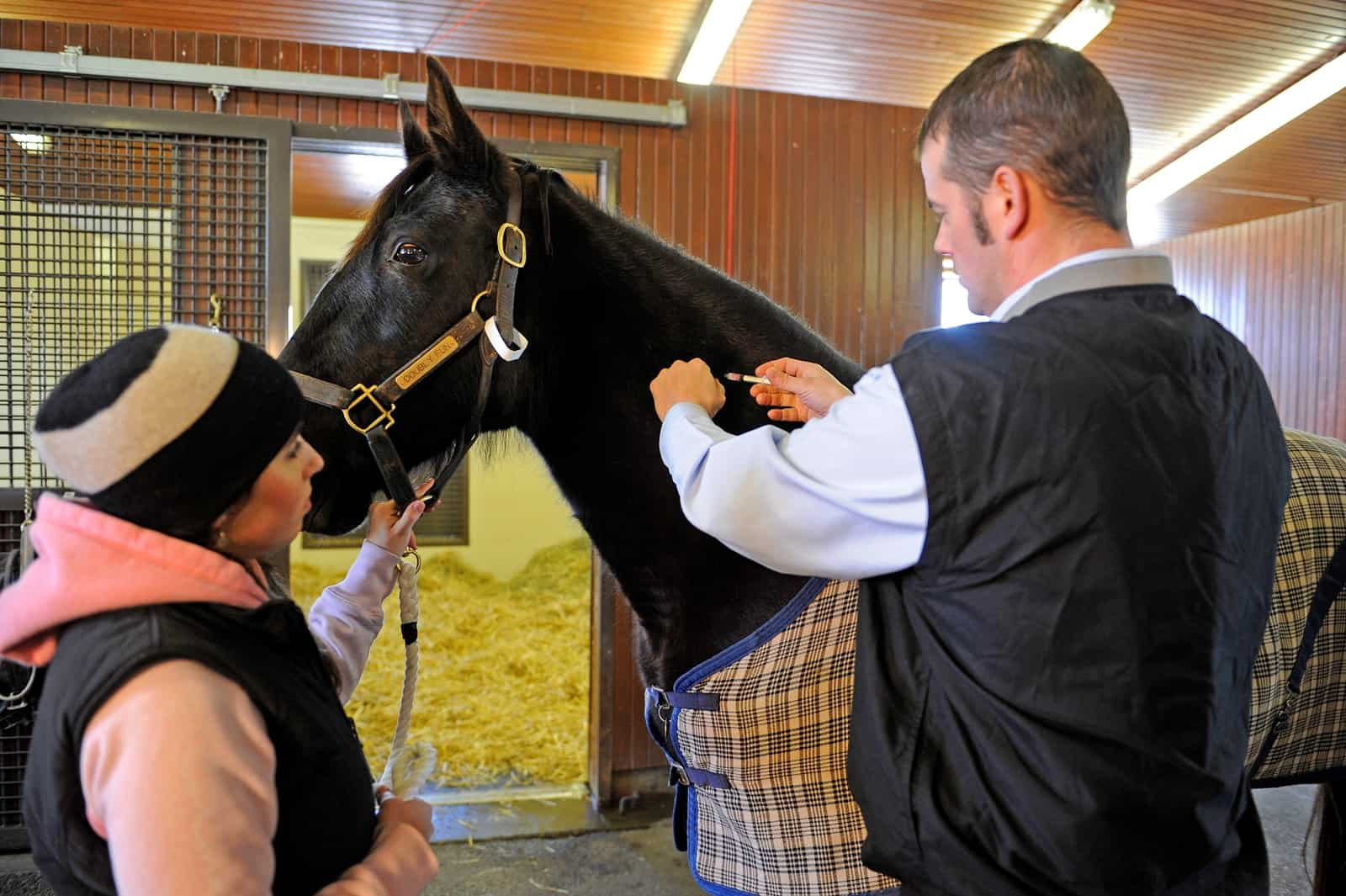Injection Objection Adverse Vaccine Reactions The Horse