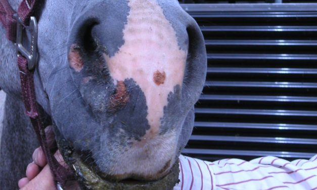 Complicated Equine Skin Diseases