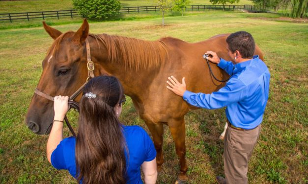 Equine Wellness Exams 101
