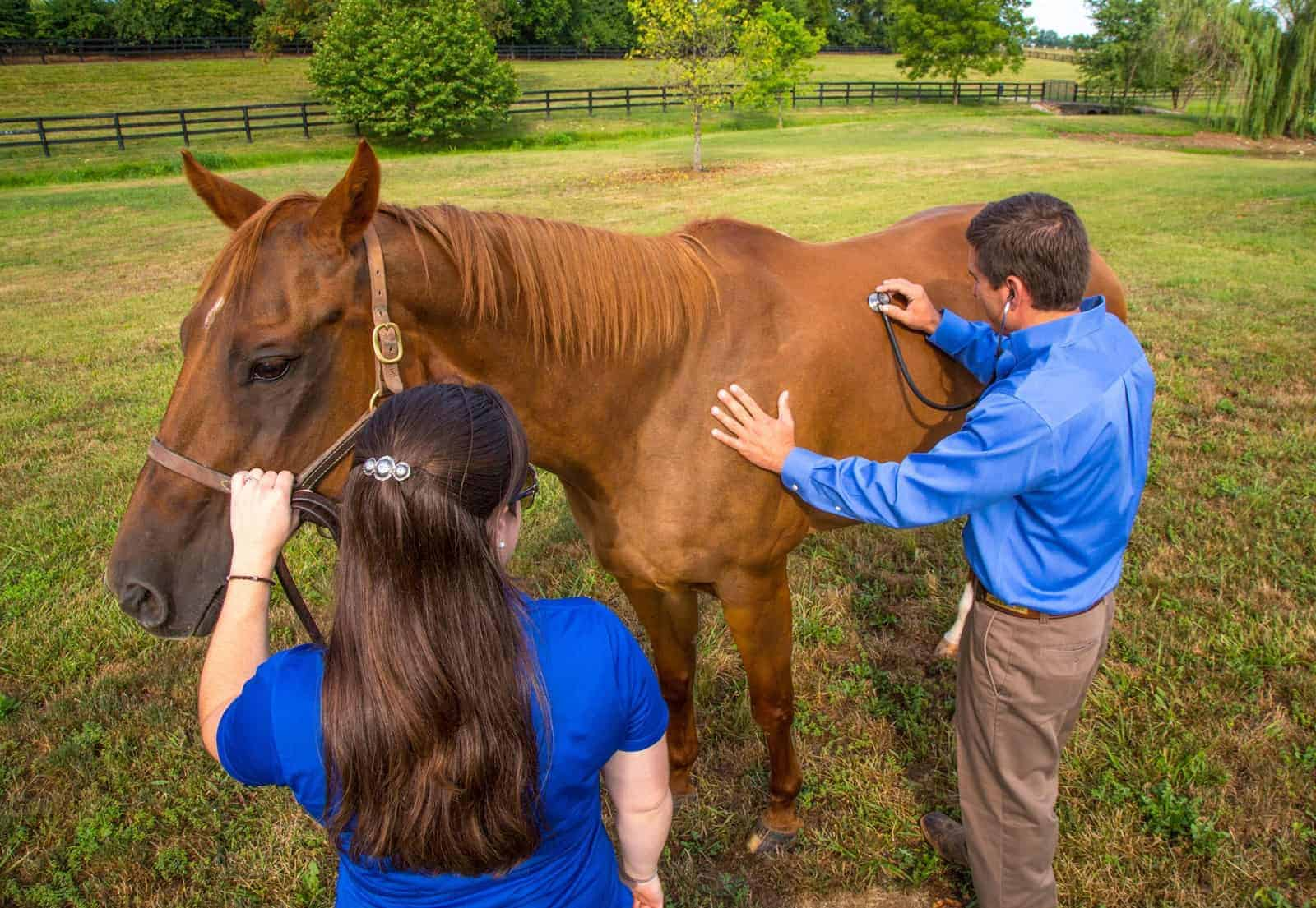 Prepurchase Exams: Crystal Ball Not Included in Veterinarian's Kit