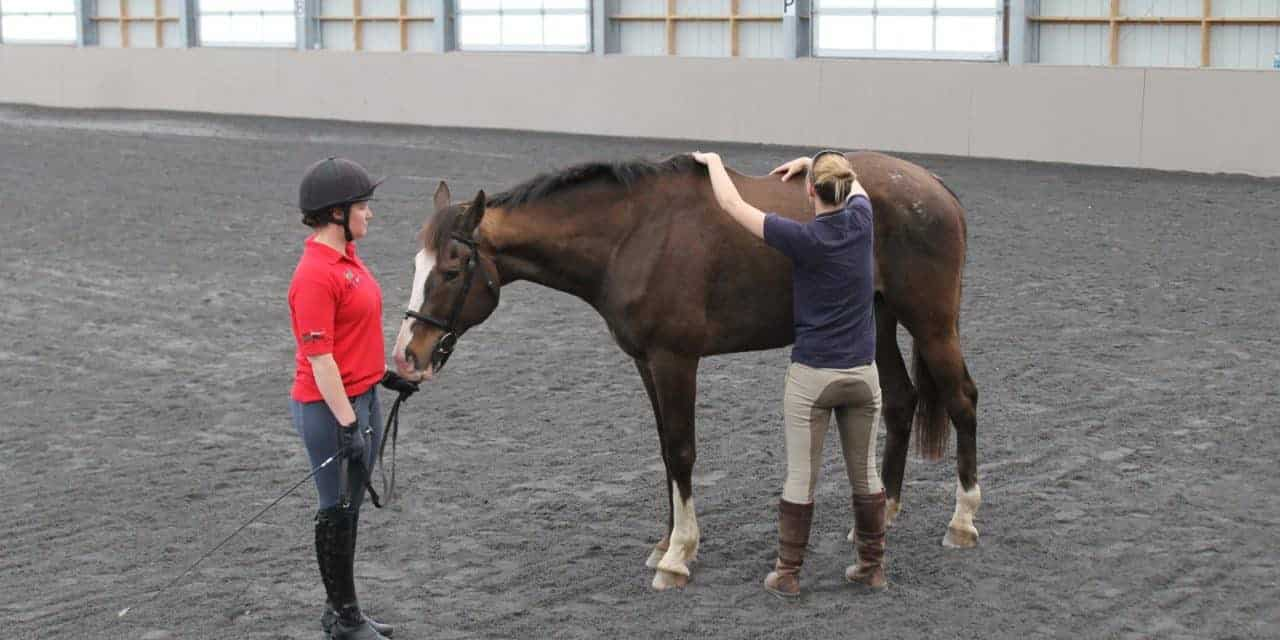 Clinical Signs and Causes of Back Pain in Horses