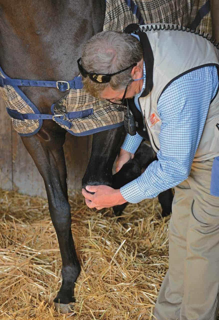 Choosing an Ex-Racehorse
