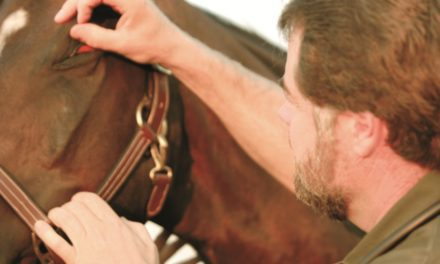 A Look at Equine Recurrent Uveitis and Leptospirosis