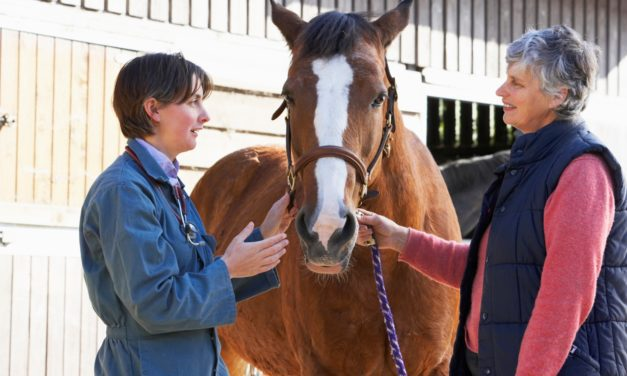 Designing an Equine Wellness Plan for Your Practice