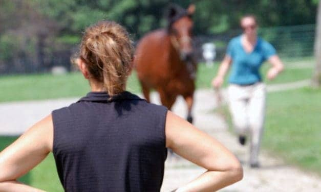 RRP Emphasizes Welfare With New Thoroughbred Makeover Arrival Exam