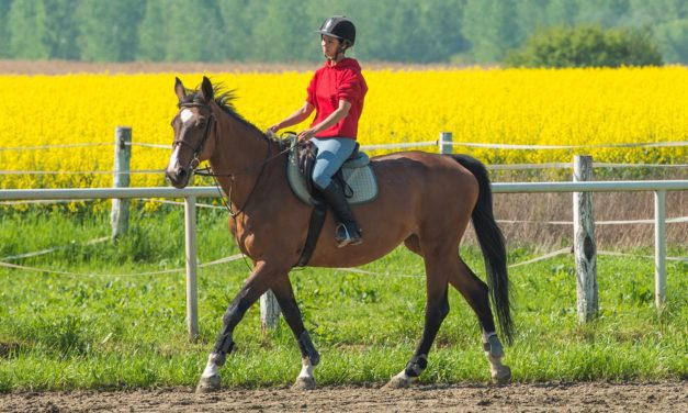 Tips for Returning Horses to Work After Soft-Tissue Injury