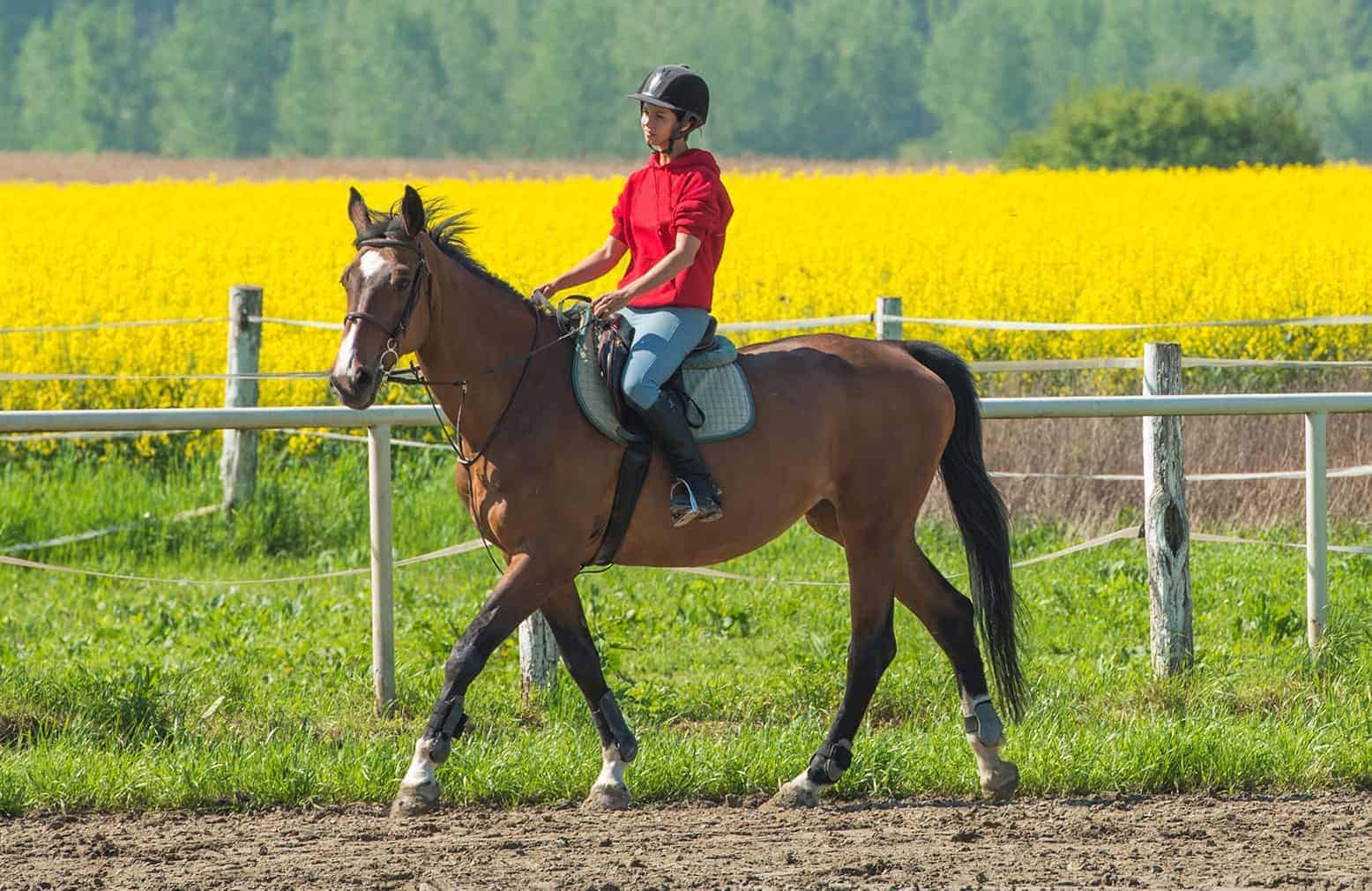 Warming Up Horses When Riding: Why and How