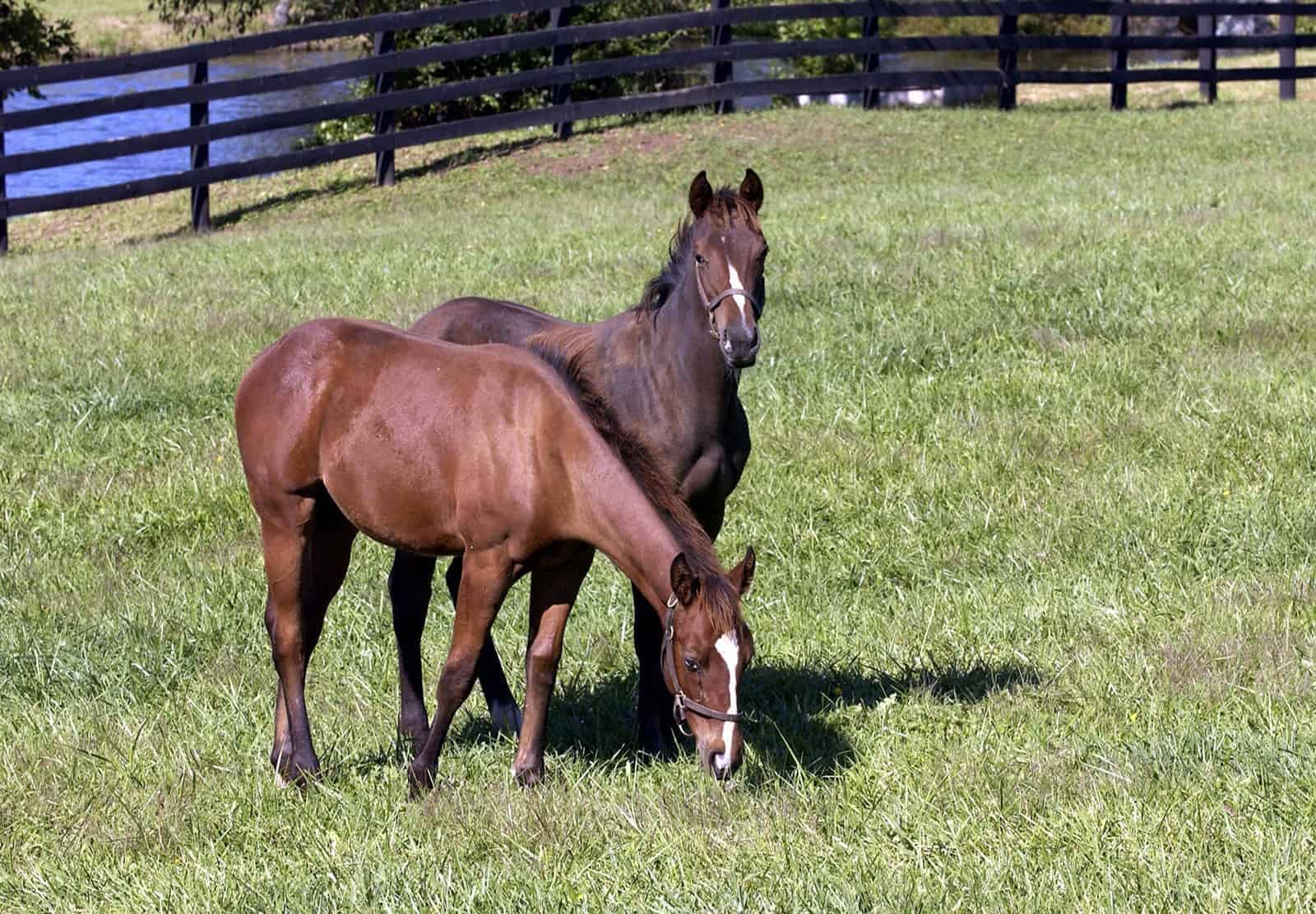What's New With Weaning Horses?
