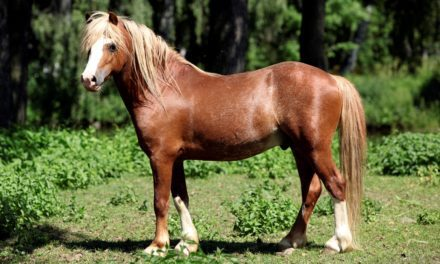 Researchers Evaluate Field Glucose Test in Ponies