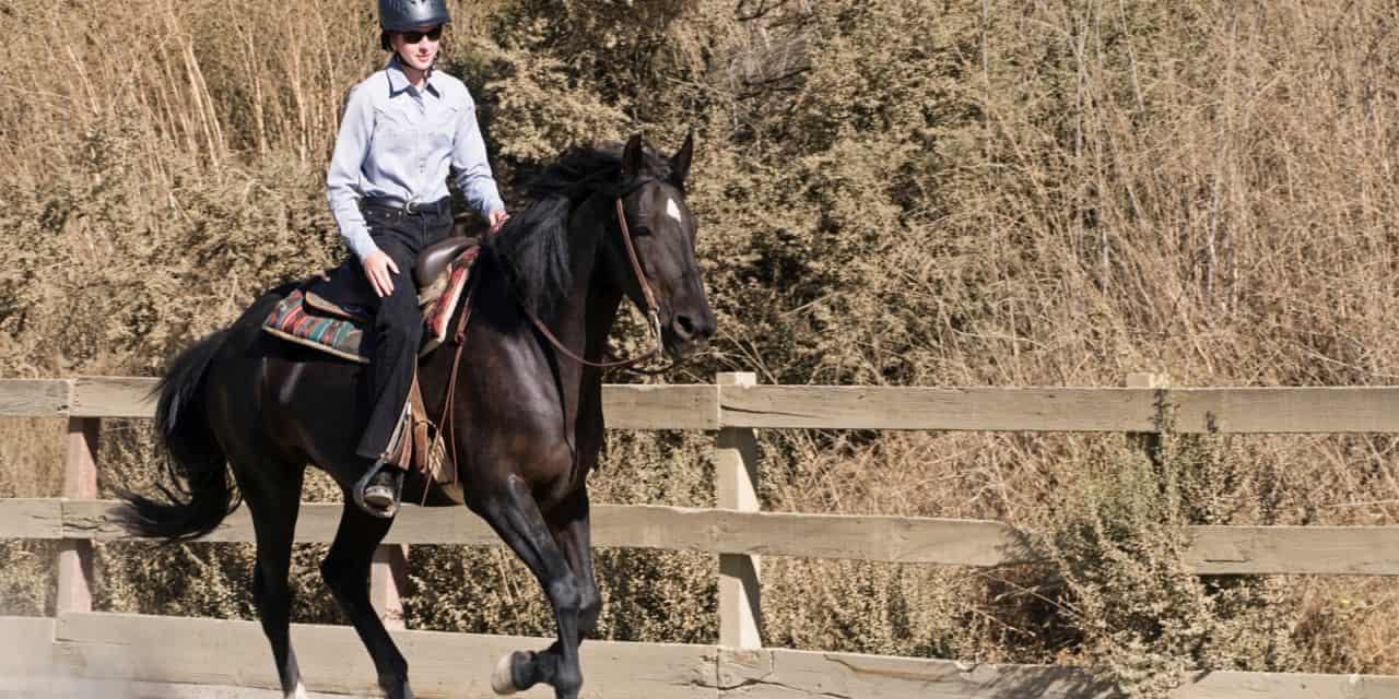 Poll Recap Saddle Type On The Trail The Horse