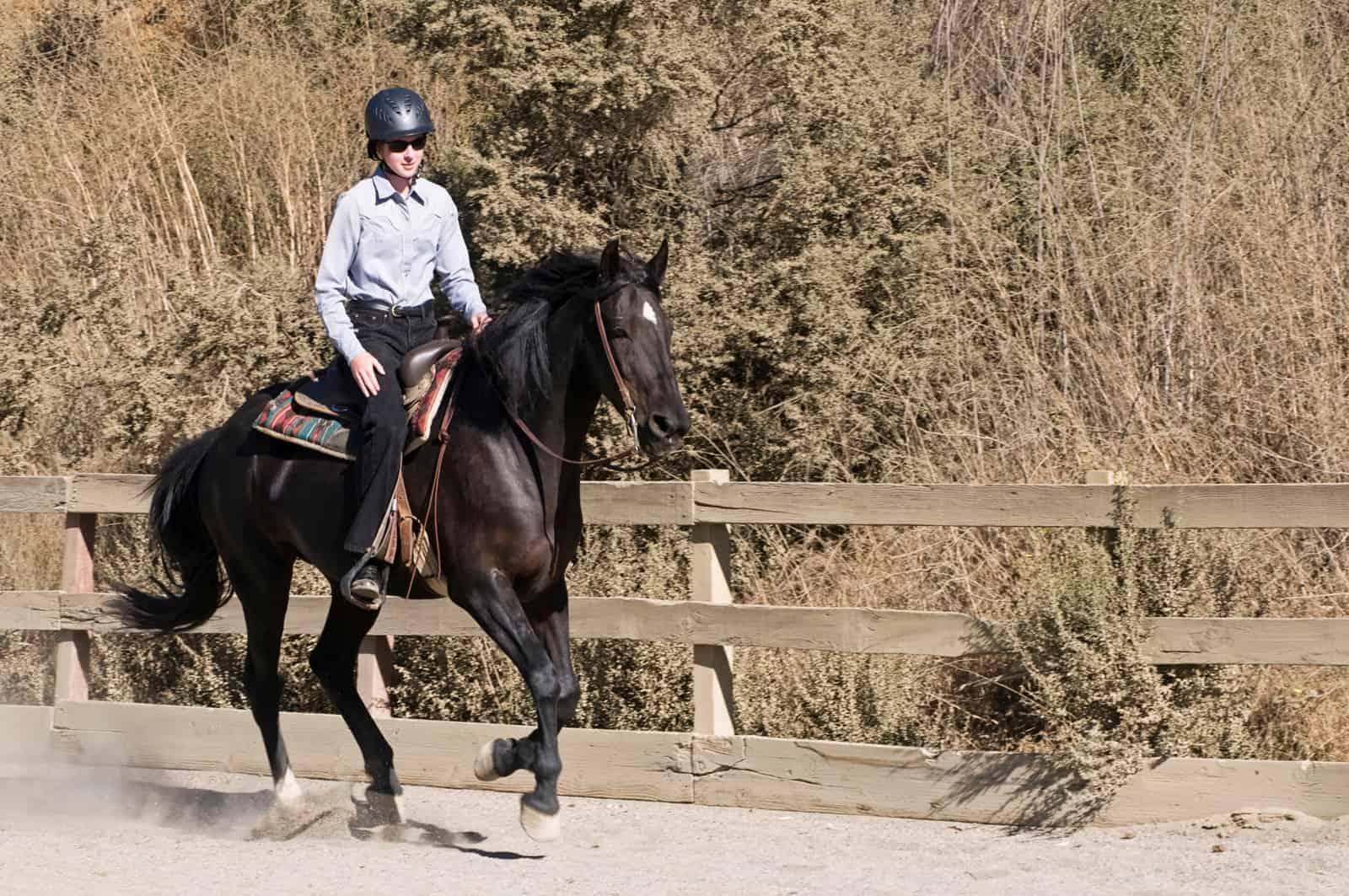 cross-training horses