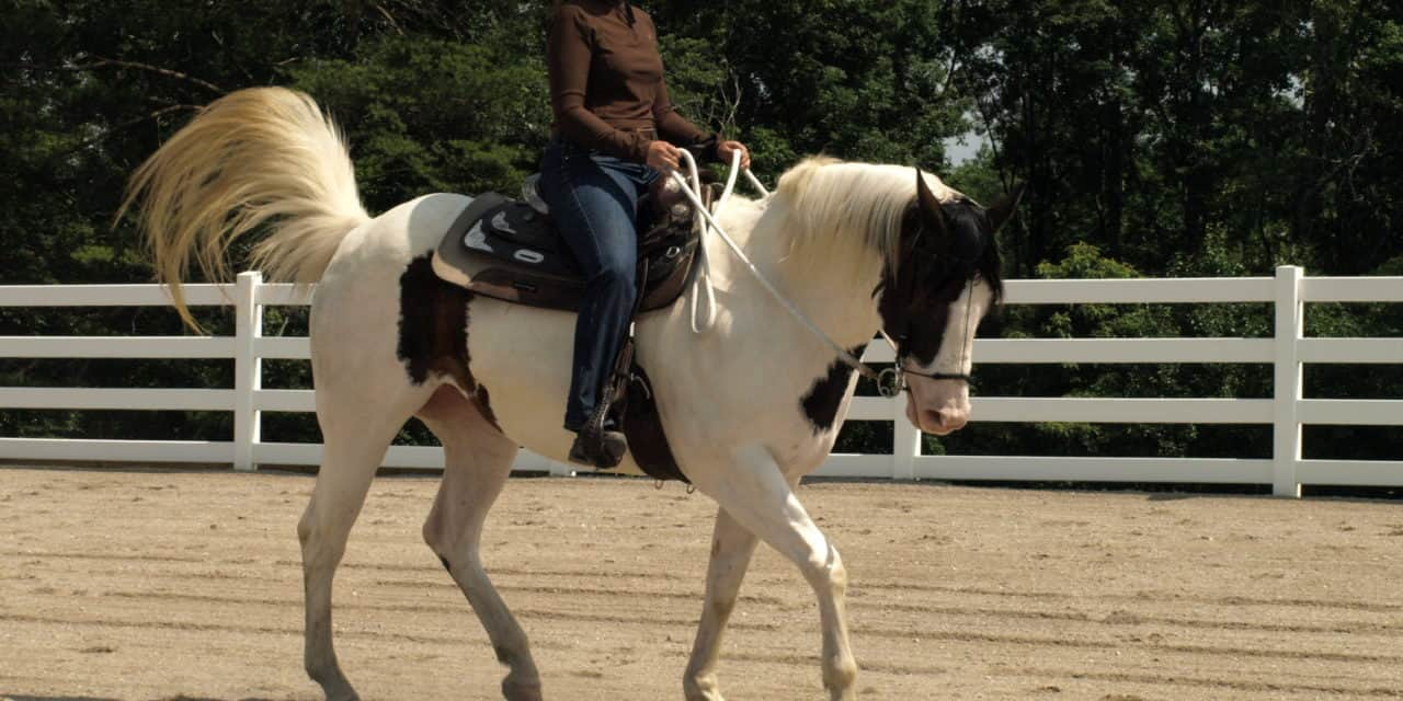Rider and Handler Effect on Horse Behavior – The Horse