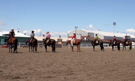 Participation Sought for Show Horse Welfare Survey