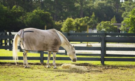 Nine Tips on Keeping Your Horse Safe from Pests