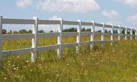 Horse Fencing Options 101