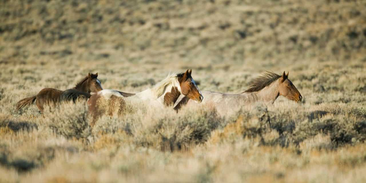 Wild Horse Health On And Off The Range The Horse