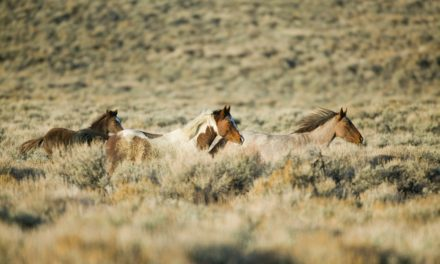 Wild Horse Health On and Off the Range