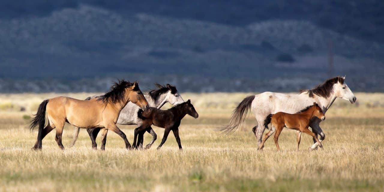 Wild Horse Burro Advisory Board To Meet In Colorado The Horse