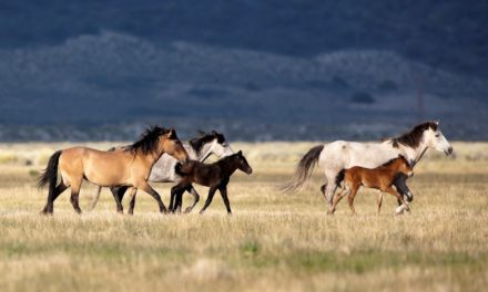 Wild Horse, Burro Advisory Board to Meet in September