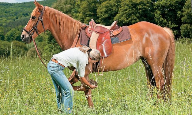Keeping Your Horse Healthy on the Trail