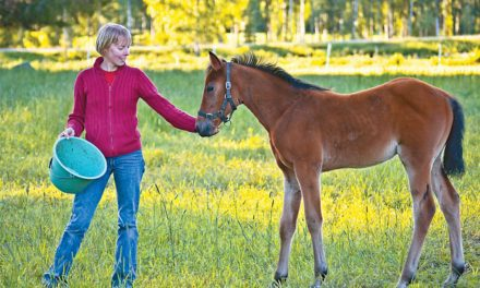 Feeding Horses for Joint Health