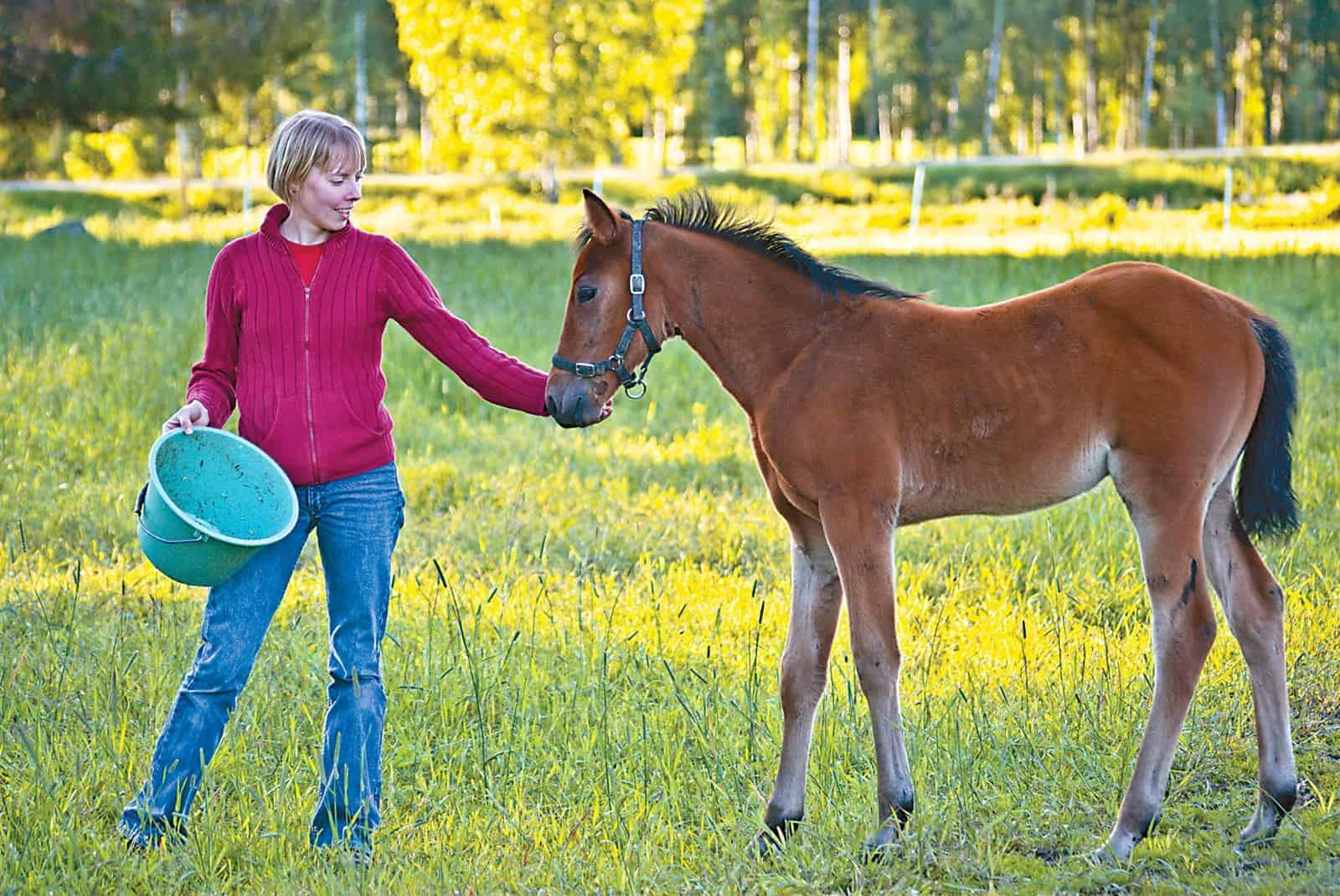 Feeding the Orphan Foal – The Horse
