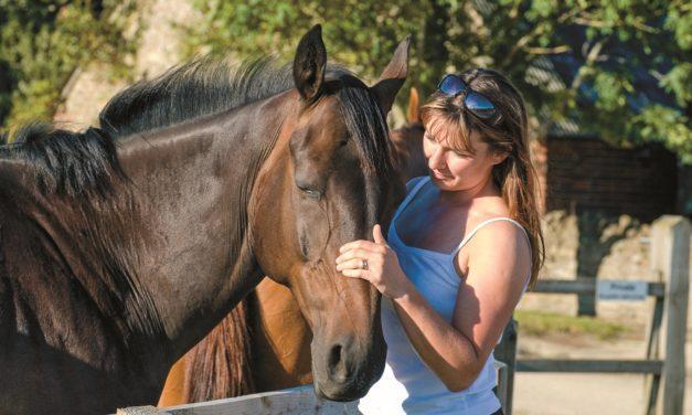 Poll Recap: Free Horses