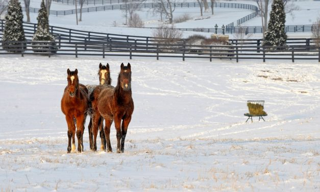 NTRA: Tax Bill Could Benefit Thoroughbred Breeders, Owners